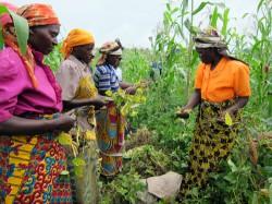 Frauen arbeiten in landwirtschaftlichen Kooperativen. ©PeopleWeaver