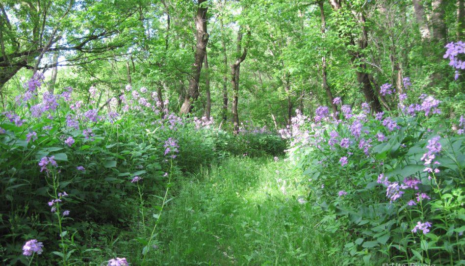 Frühling – neue Ziele, neue  Laufabenteuer