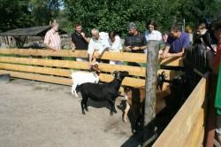 Eine Streicheleinheit für die Tiere. Uta verbrachte zusammen mit Mitgliedern des Take The Magic Step-Teams eine schöne Zeit auf dem Kinderbauernhof. ©Take The Magic Step®
