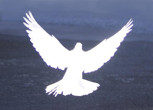 Laufend Konflikte bewältigen beim Berliner Friedenslauf