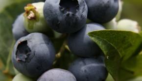 Sommer-Fitness: Teil II – Tipps zur Ernährung und ausreichender Flüssigkeitsaufnahme