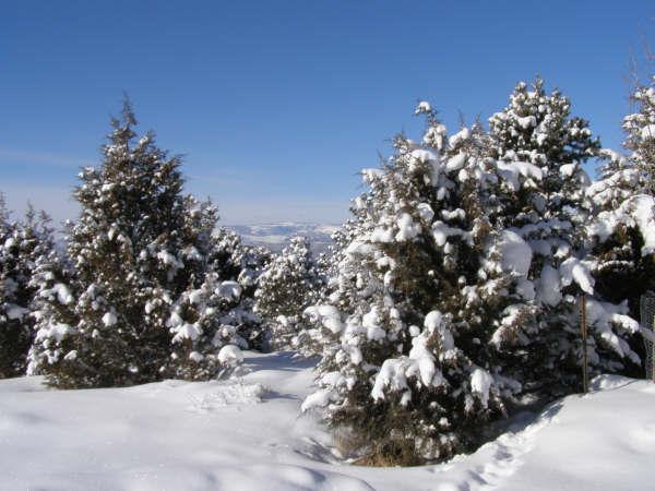 Herzlichste Weihnachtsgrüße und ein erfolgreiches Neues Jahr