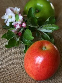Ein Apfel am Tag…