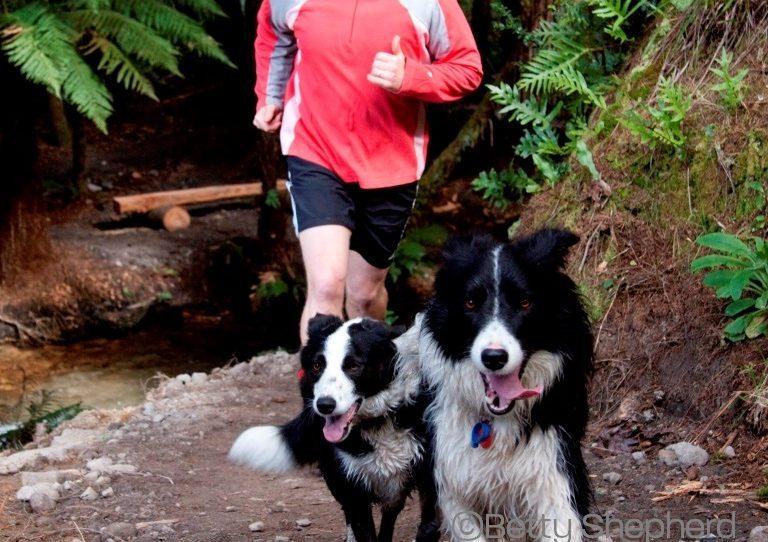 Laufen mit Hunden – Herrchen und Tier in Partnerschaft